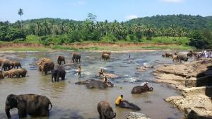 Sri Lankan Elephant Orphanage
