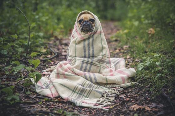 cozy-dog
